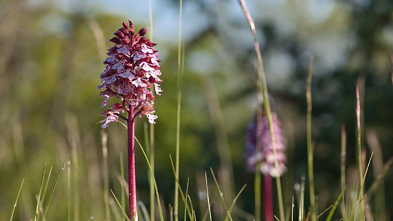 Orchidées _5074354