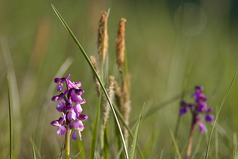 Orchidées _5074408
