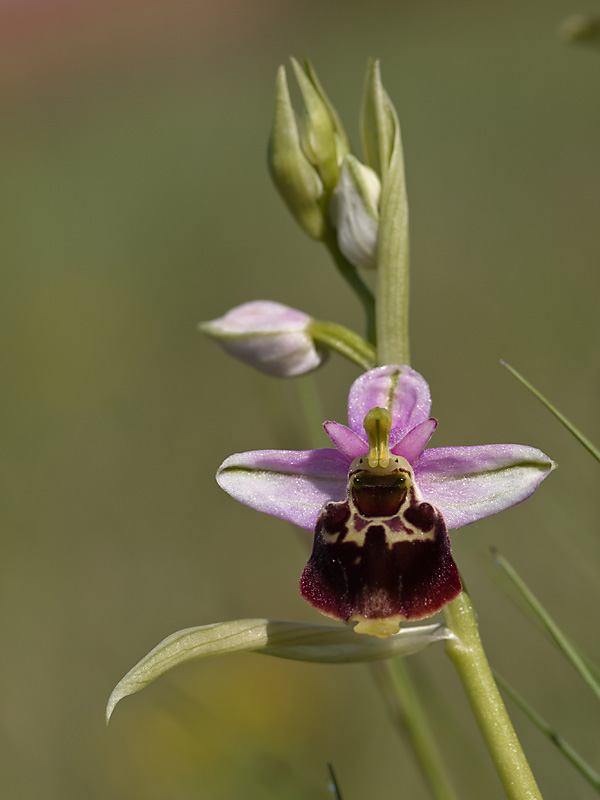 Orchidées _5074482
